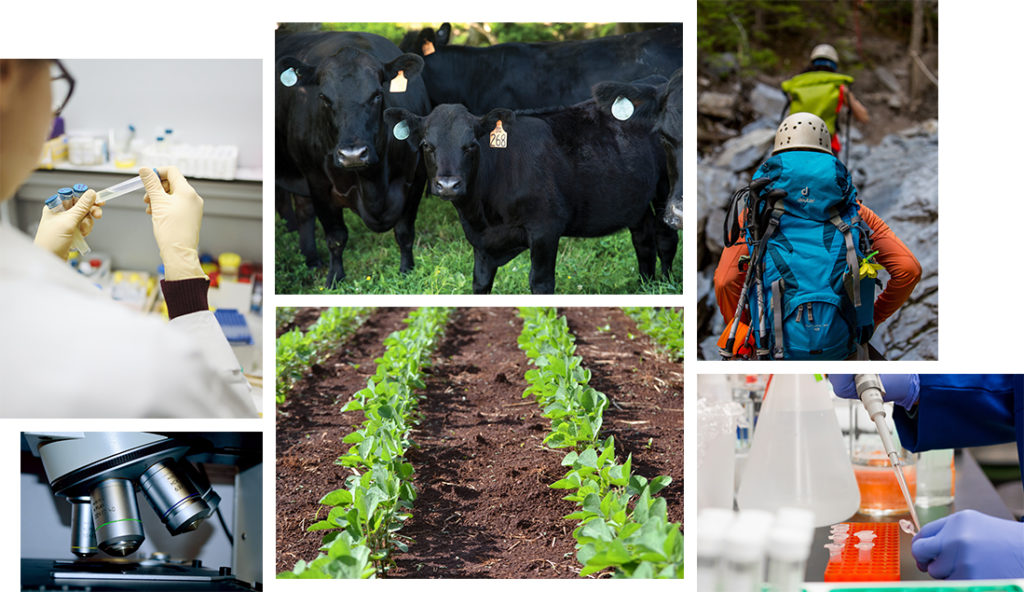 A collage of One Health issues, including medicine, livestock, plants, and humans.