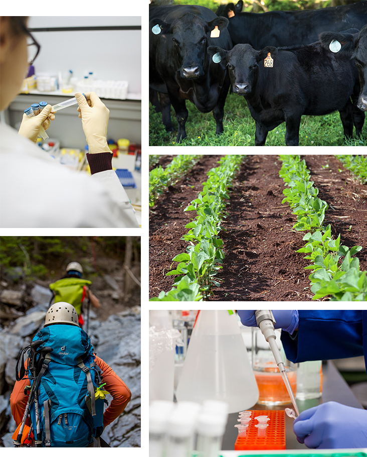 A collage of One Health topics such as livestock health, plant health, and human health.