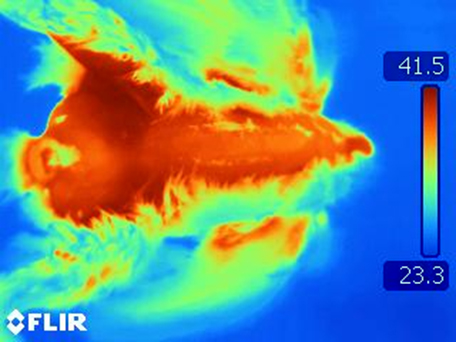 Feather coverage evaluation using thermography.
